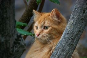 red cat sitting on a tree