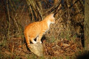 young red cat sitting on the stone