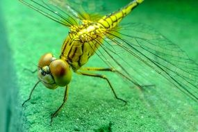 yellow dragonfly on a green leaf