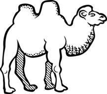 Picture of Bactrian Camel