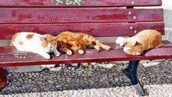 Cat resting on a bench