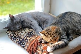 sleeping cats on the windowsill