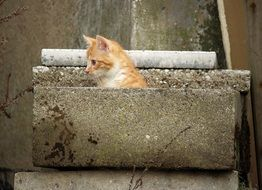 Kitten in a stone hiding place