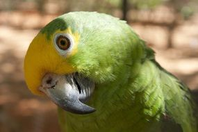 portrait of a cute yellow-green parrot