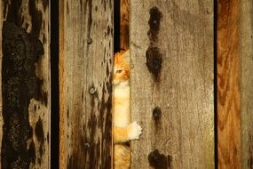 spying young cat in hiding place