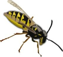 Black and yellow wasp clipart