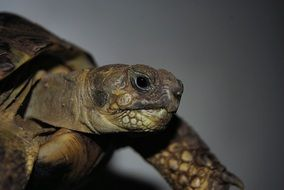 photo portrait of a turtle