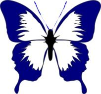 Picture of black and blue Butterfly