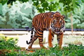 tiger stands on green grass
