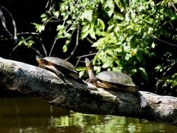 Turtles Animal