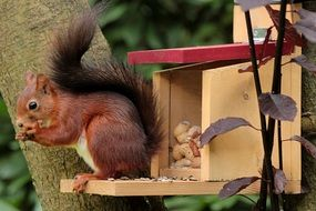 squirrel eating on the feeding box