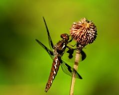 striking Dragonfly Insect