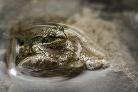 Frog in a water