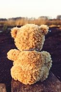 teddy bear outdoor