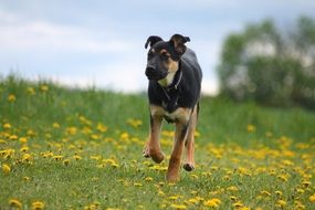 young dog on the wild meadow