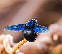 insect with bright blue wings close up
