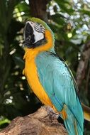 colorful tropical bird macaw