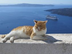 cat on the background of the Mediterranean Sea on a sunny day