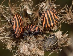 striped insects on dry grass