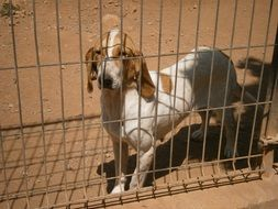 Hunting dog in prison