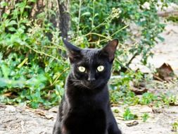 black stray cat on the street