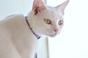 white cat with expressive eyes