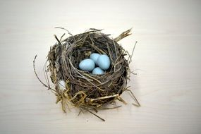 blue eggs in a wicker nest