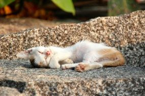 sleeping young cat outdoor