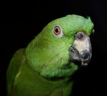 parrot with green plumage