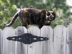 angry Cat on the fence