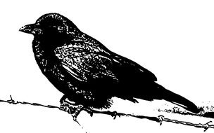 drawing of a raven on a branch