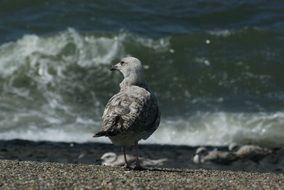 seagull on the seashore on a sunny day