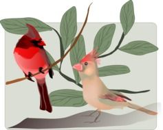 drawing two oscine birds on a branch