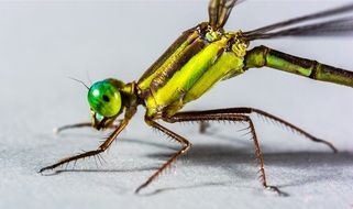 closeup of a yellow green dragonfly