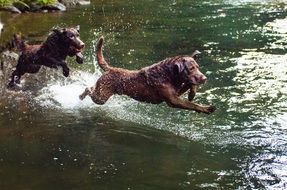 Dogs play by Water