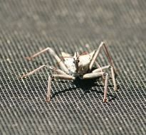 Assassin Wheel Bug
