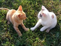 white and red kittens on green grass