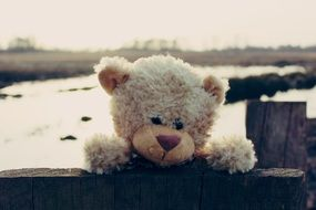 light brown teddy bear outdoor