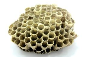 wasp nest on white surface