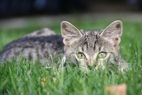 young tiger cat on green grass close up