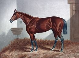 painted brown horse in a stall