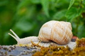 white snail close up