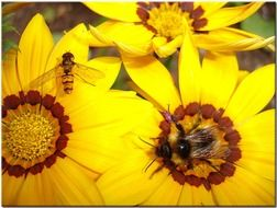 bees on a large yellow flower