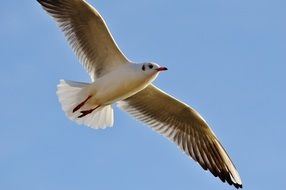 Photo of beautiful white seagull