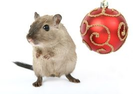 domestic mouse and red Christmas ball