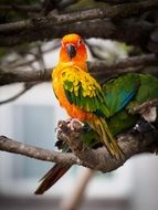 perched cute colorful parrot