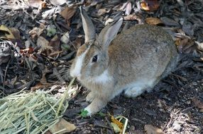 wild rabbit in Hiroshima