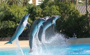 Dolphins are jumping from the water