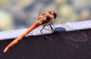 macro photo of a beautiful dragonfly