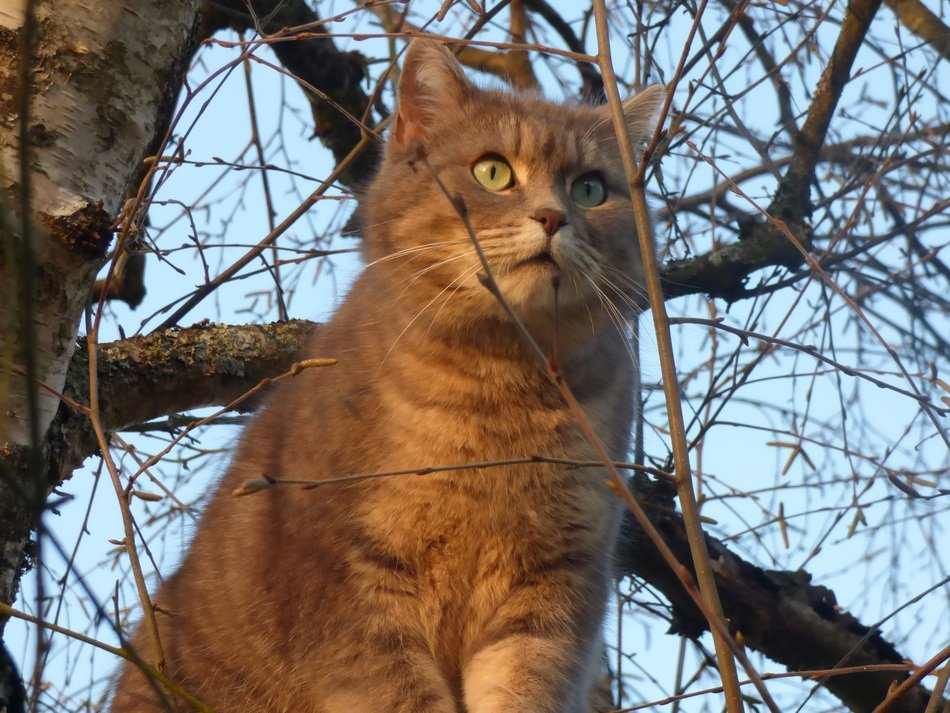 red cat with big eyes on a tree